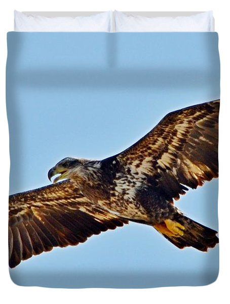 Juvenile Bald Eagle In Flight Close Up Duvet Cover by Jeff at JSJ Photography