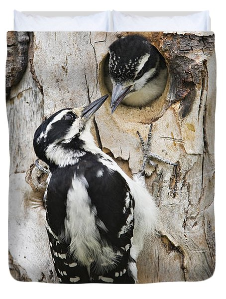 Juvenile Hairy Woodpecker Is Fed Duvet Cover by Ray Bulson