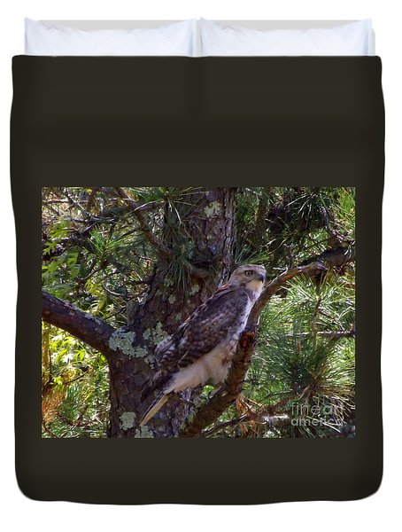 Juvenile Red-tailed Hawk Duvet Cover by CapeScapes Fine Art Photography