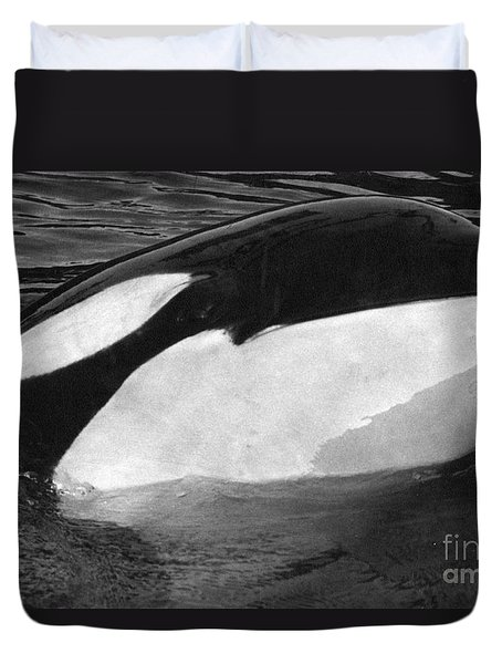 Kandu Orca Seattle Aquarium 1969 Pat Hathaway Photo Killer Whale Seattle Duvet Cover by California Views Mr Pat Hathaway Archives