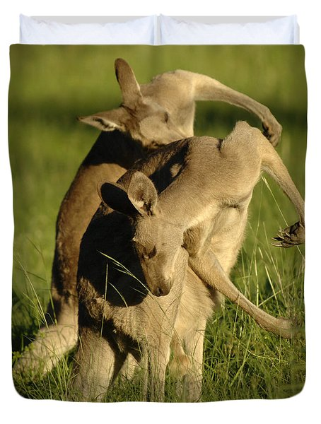 Kangaroos Taking A Bow Duvet Cover by Bob Christopher