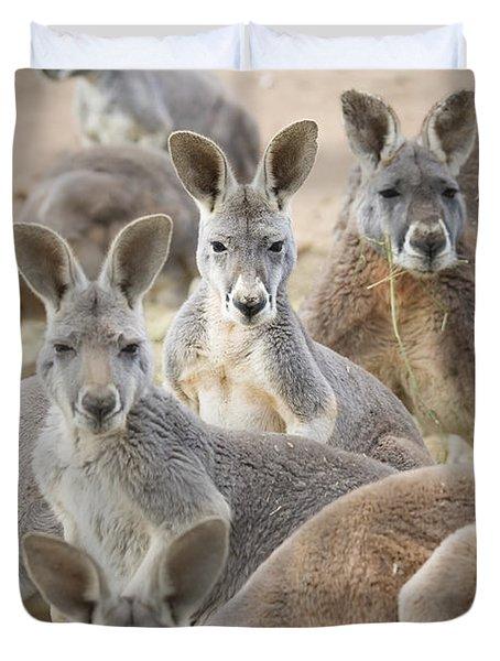 Kangaroos Waga Waga Australia Duvet Cover by Jim Julien