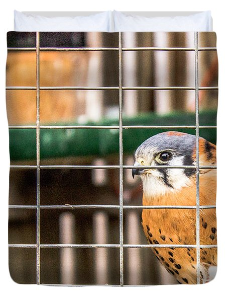 Kestrel And A Headless Mouse Duvet Cover