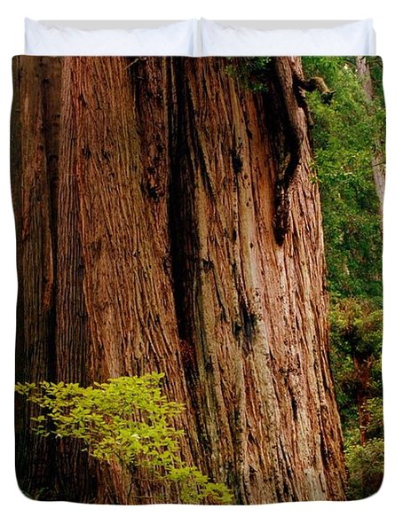 Kevin And The Big Tree - Redwood National Forest Duvet Cover