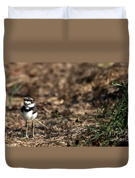 Killdeer Chick Duvet Cover