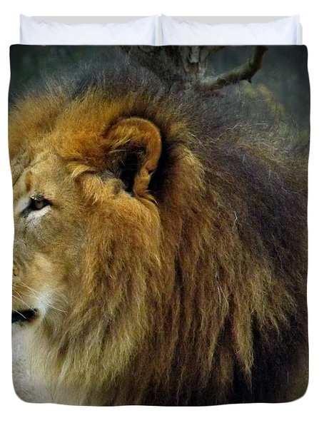 King Of The Jungle Duvet Cover by Sara  Raber