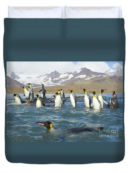 King Penguins Swimming St Andrews Bay Duvet Cover by Yva Momatiuk John Eastcott
