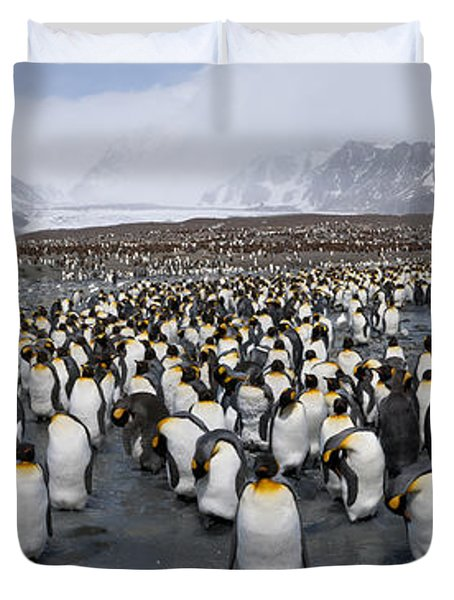King Penguins Aptenodytes Patagonicus Duvet Cover by Panoramic Images