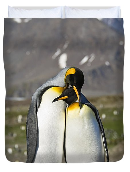 Duvet Cover featuring the photograph King Penguins Courting St Andrews Bay by Konrad Wothe