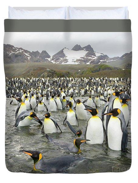 King Penguins At Gold Harbour  Duvet Cover by Yva Momatiuk John Eastcott