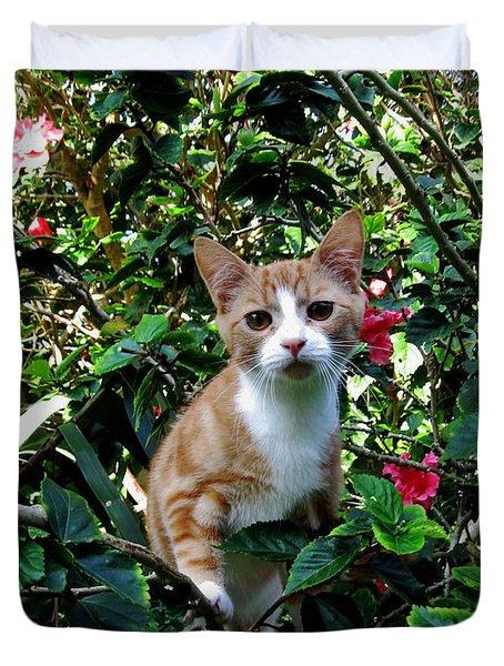 Kitten Duvet Cover by Pamela Walton