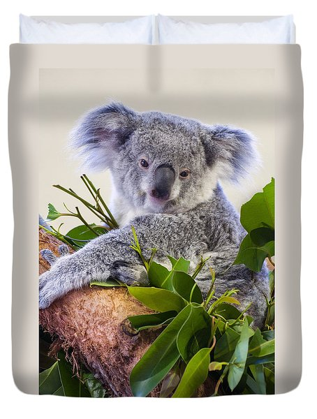 Koala On Top Of A Tree Duvet Cover