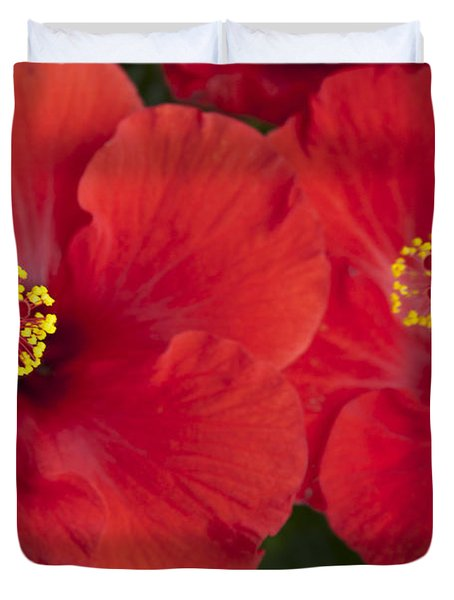 Kokio Ulaula - Tropical Red Hibiscus Duvet Cover by Sharon Mau
