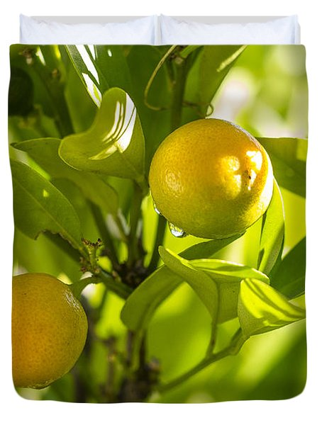 Kumquats Duvet Cover