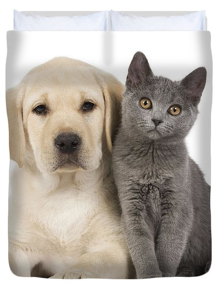 Labrador Puppy With Chartreux Kitten Duvet Cover by Jean-Michel Labat