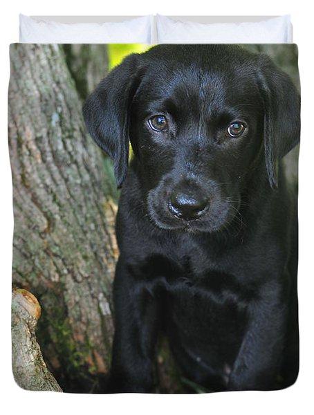 Labrador Retriever Puppy Duvet Cover by Catherine Reusch Daley