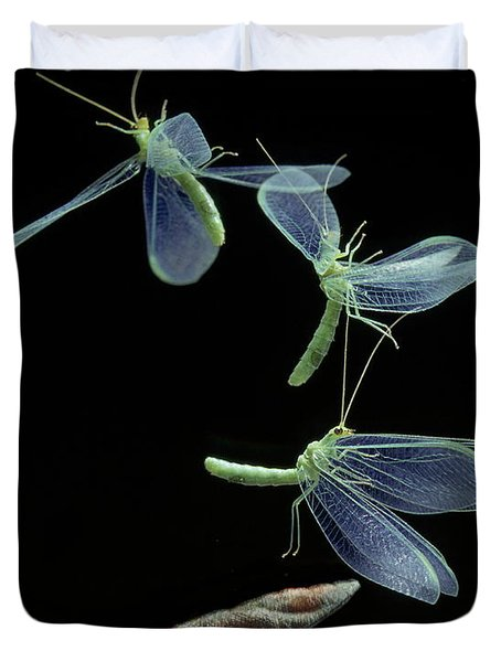 Lacewing Taking Off Duvet Cover