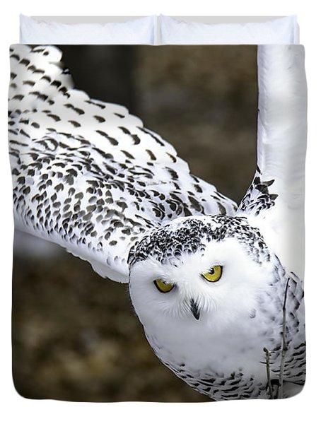 Landing Of The Snowy Owl Where Are You Harry Potter Duvet Cover by LeeAnn McLaneGoetz McLaneGoetzStudioLLCcom
