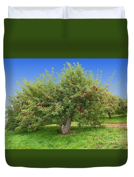 Large Apple Tree Duvet Cover by Anthony Sacco