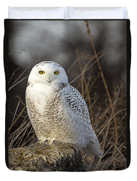 Late Season Snowy Owl Duvet Cover