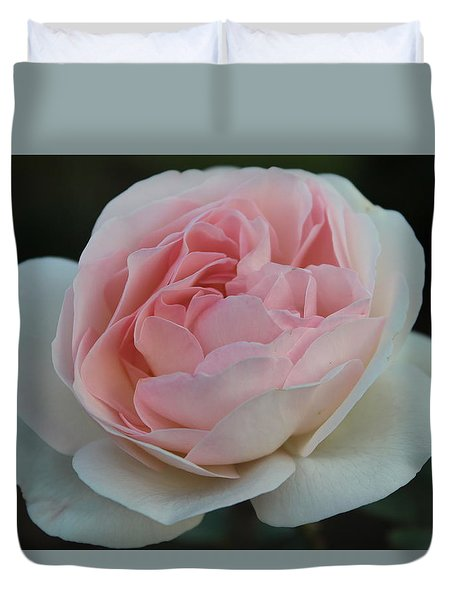 Late Summer's Rose Duvet Cover by Patricia Hiltz