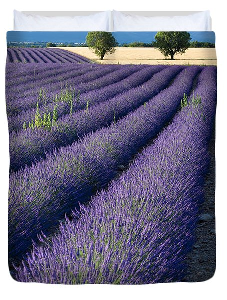 Lavender Fields Duvet Cover by Brian Jannsen