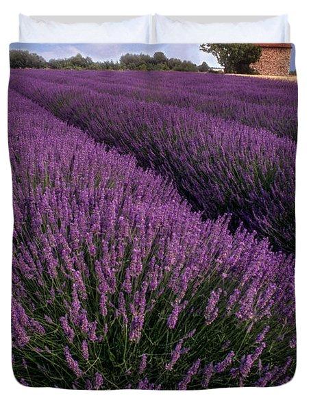 Lavender In Provence Duvet Cover