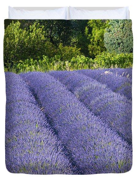 Lavender Rows Duvet Cover by Bob Phillips