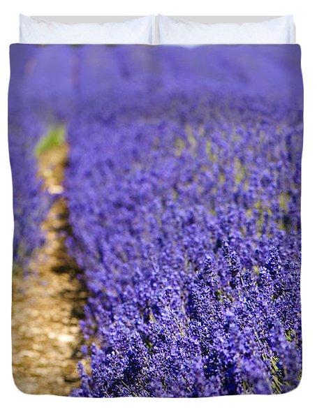 Lavender's Blue Duvet Cover by Anne Gilbert