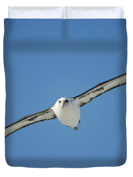 Laysan Albatross Soaring Hawaii Duvet Cover