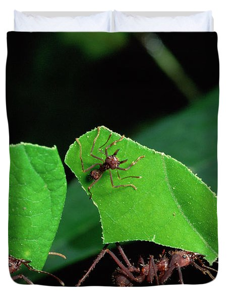Leafcutter Ant Atta Sp Group Workers Duvet Cover by Michael and Patricia Fogden