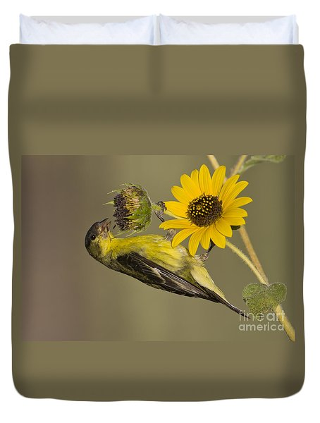 Lesser Goldfinch On Sunflower Duvet Cover by Bryan Keil