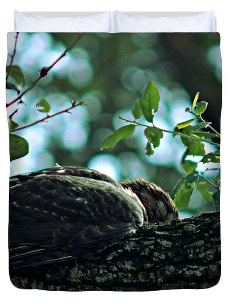 Let Sleeping Hawks Lie Duvet Cover by Greg Allore