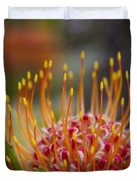 Leucospermum Pincushion Protea - Tropical Sunburst Duvet Cover by Sharon Mau