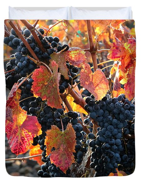Light Through Fall Vineyard Duvet Cover by Carol Groenen