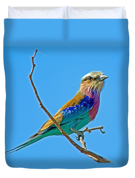 Lilac-breasted Roller In Kruger National Park-south Africa Duvet Cover