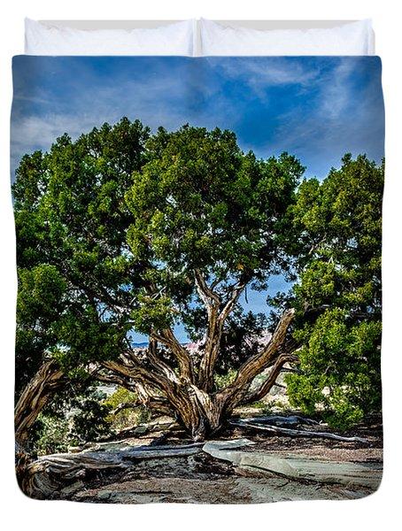 Limber Pine Duvet Cover