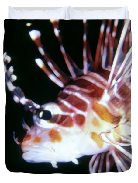 Lionfish 3 Duvet Cover by Dawn Eshelman