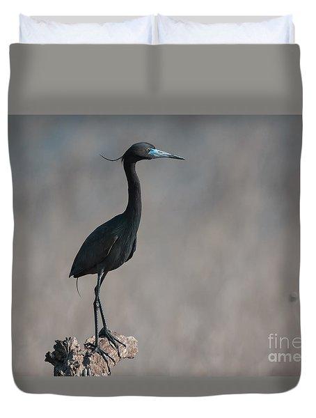 Little Blue Heron Portrait Duvet Cover by Robert Frederick