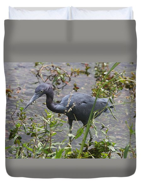 Little Blue Heron - Waiting For Prey Duvet Cover by Christiane Schulze Art And Photography