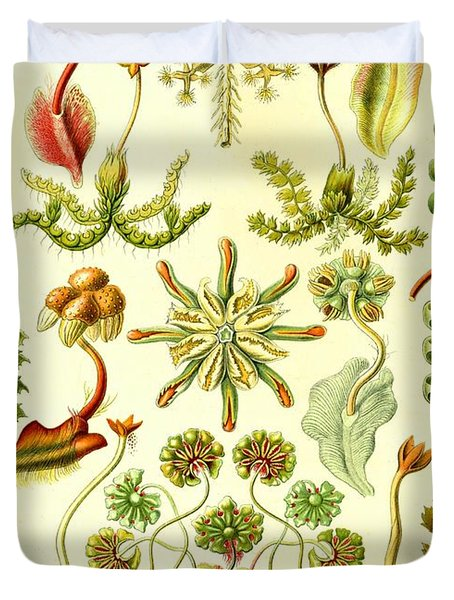 Liverworts Moss Brunnenlebermoos Haeckel Hepaticae Duvet Cover