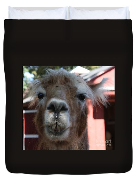 Llama After A Rough Night Duvet Cover by John Telfer