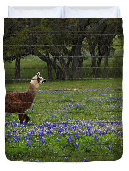 Duvet Cover featuring the photograph Llama In Bluebonnets by Susan Rovira