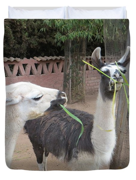 Llamas In Peru Duvet Cover