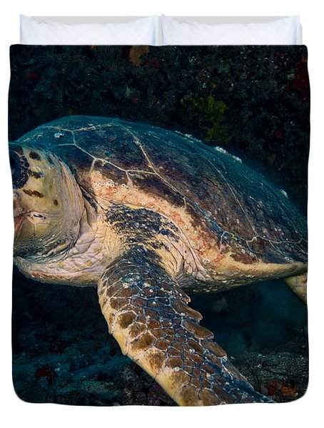 Loggerhead Turtle Under Ledge Duvet Cover