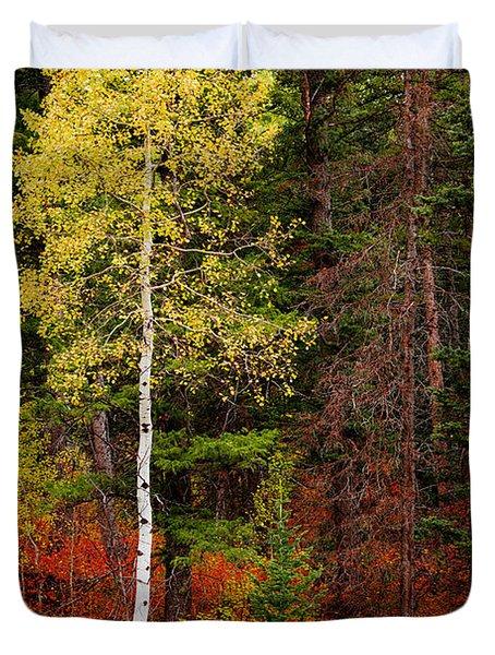 Lone Aspen In Fall Duvet Cover