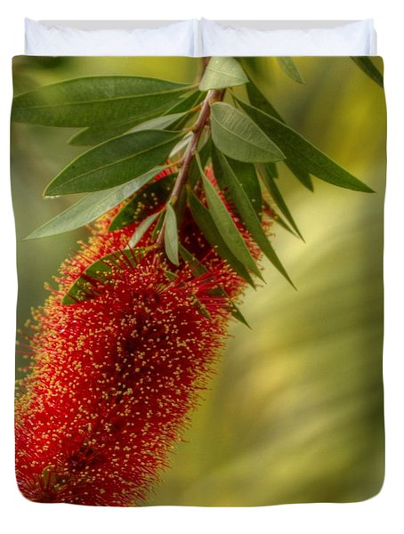 Lone Bottlebrush Duvet Cover