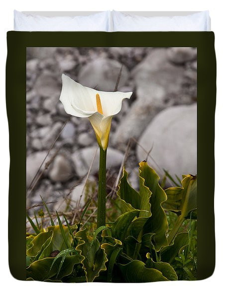 Lone Calla Lily Duvet Cover by Melinda Ledsome