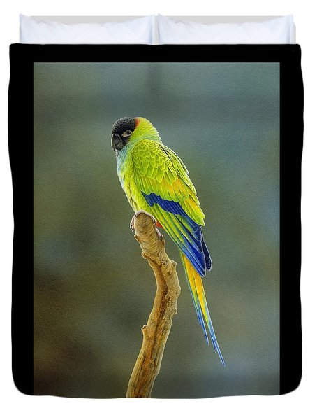 Lone Star - Nanday Conure Duvet Cover by Frances McMahon