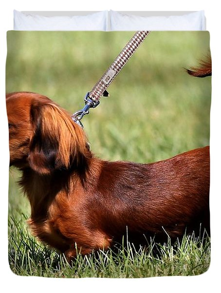 Long Haired Dachshund Duvet Cover